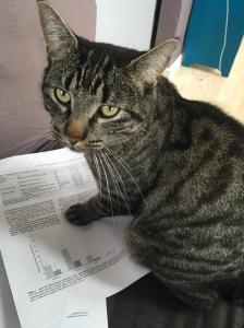 Her i huset er kattene meget kloge :-)