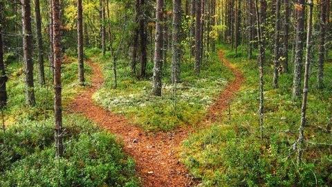 split-path-480x270